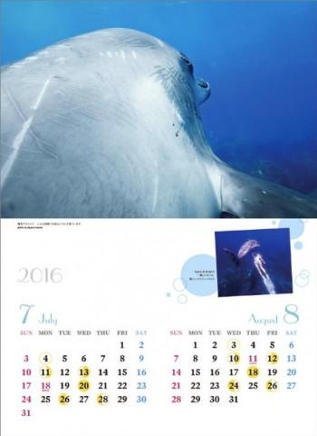2016ドルフィンスイムカレンダー78