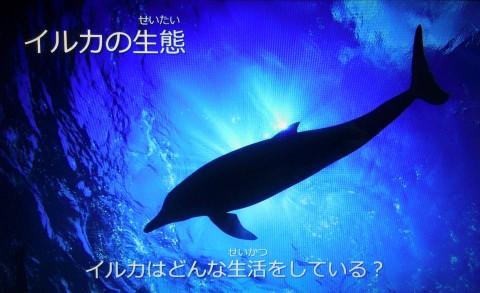 海の王国 鈴木あやのトークショー