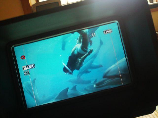 イルカの大群と私 これが3Dに!
