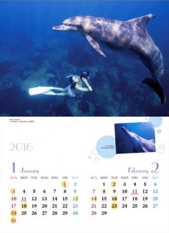 2016ドルフィンスイムカレンダー12