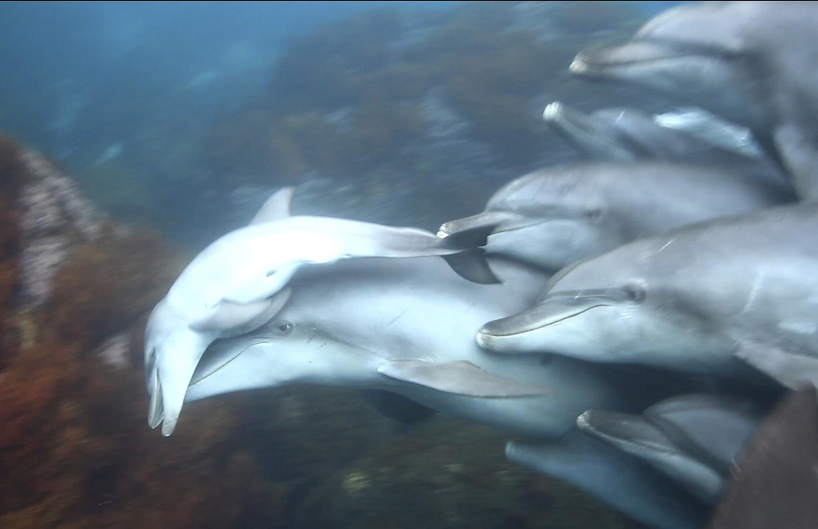 イルカの画像 p1_35