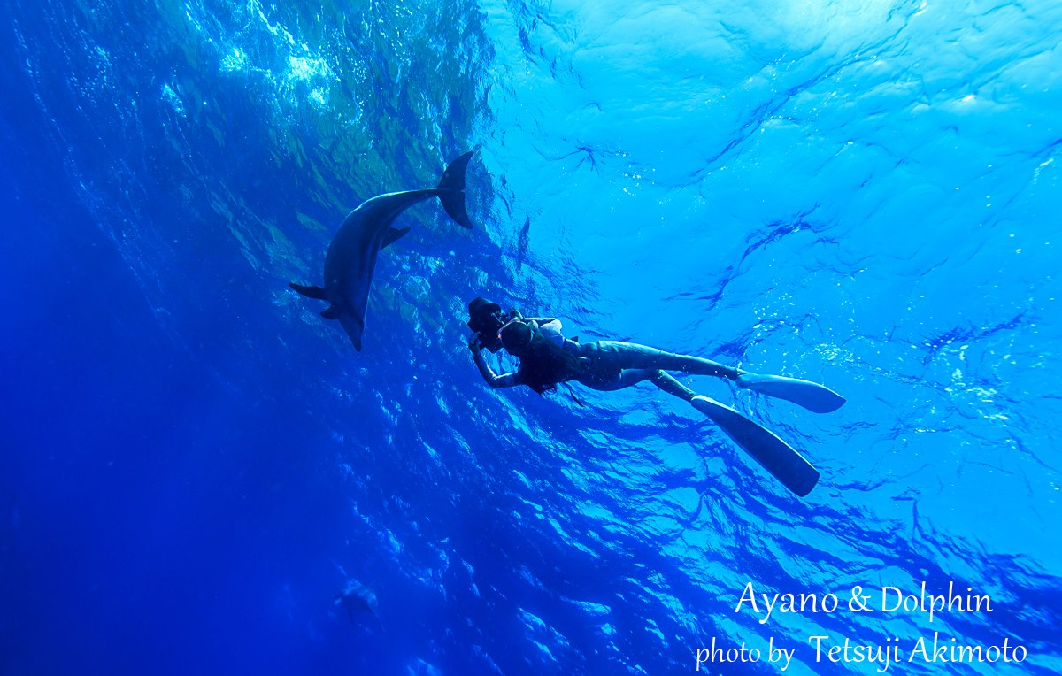 イルカの画像 p1_1