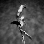 美しき二つの肢体 エプソンフォトグランプリ入賞作品 鈴木あやの