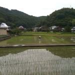 普通の田の風景