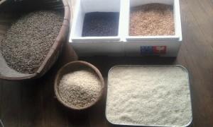 籾摺り、精米後のお米