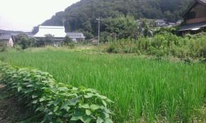 共同田_140825_104256